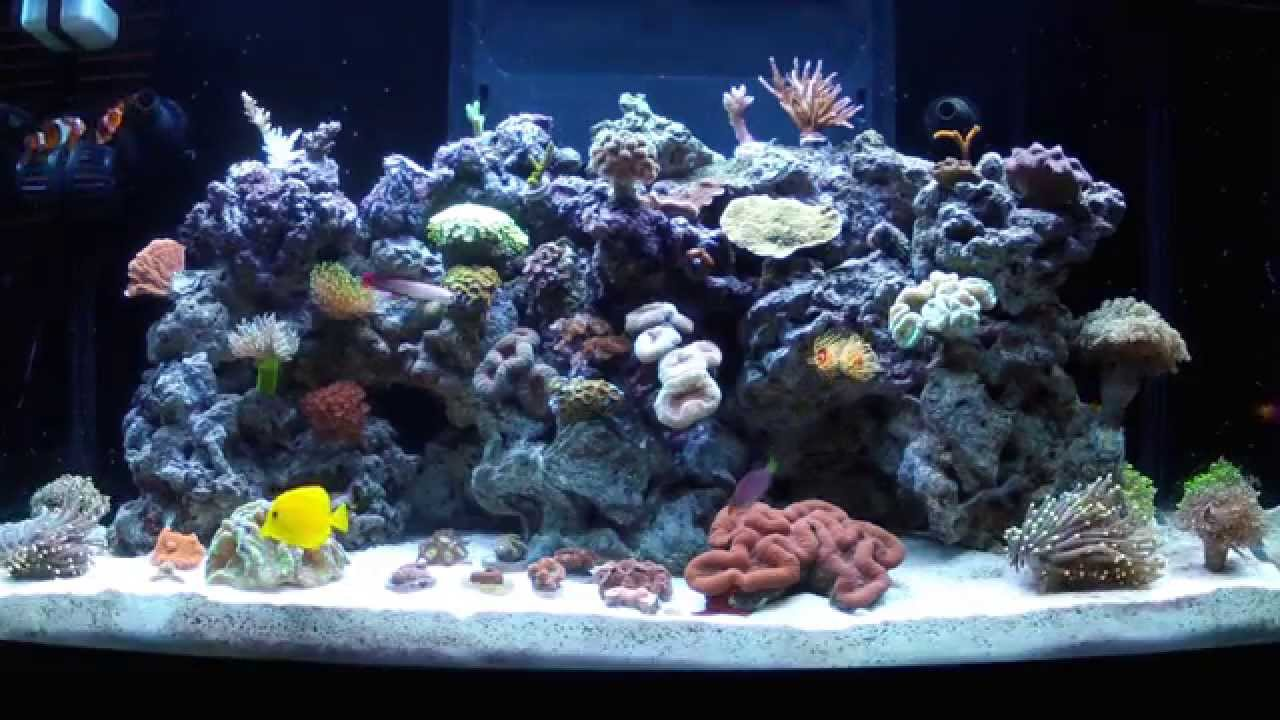 sea max 250 reef tank 10 weeks