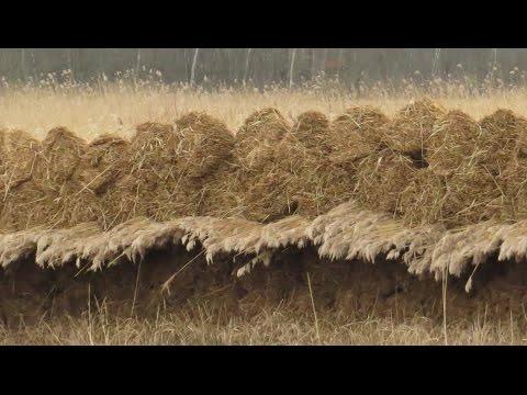 Nederland, waterland: rietvelden. Netherlands, land of water: reeds.