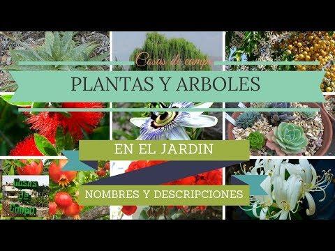 Plantas y arboles de jard n con nombres youtube for Arboles con sus nombres y caracteristicas