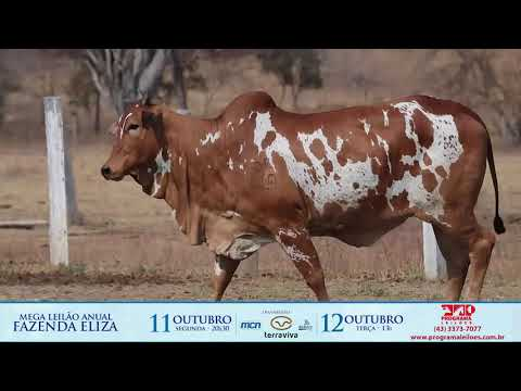 LOTE 168