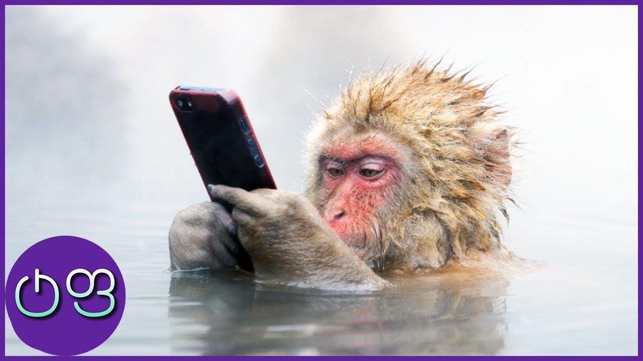 ყველაზე ჭკვიანი ცხოველები მსოფლიოში ★ ტოპ ფაქტები ★