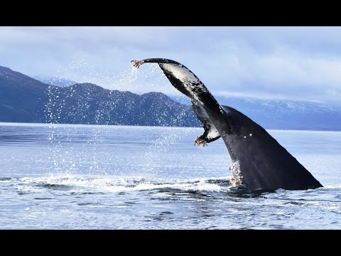 Patagonia Whalewatching - whalesound
