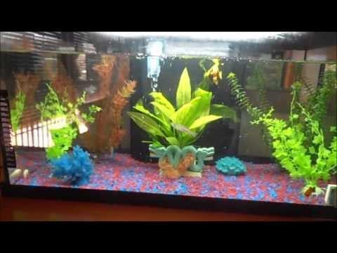 Acuario con peces de agua caliente 2013 youtube for Peces de agua estancada