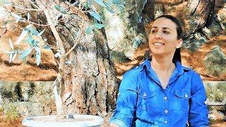 كيفية إنشاء شجرة بونساي من المواد التي تم جمعها: الكافور Yamadori (Eucalyptus globulus)