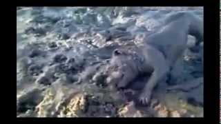 Собака балдеет в грязи