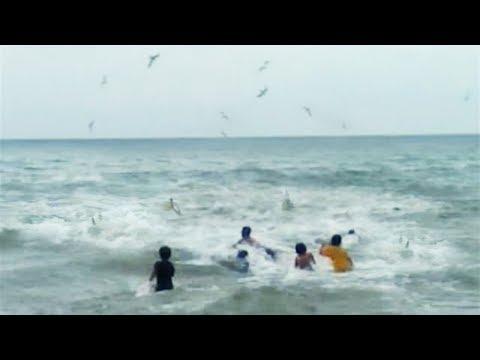 Fenomena Alam 2017!! Ribuan ikan keluar dari laut..