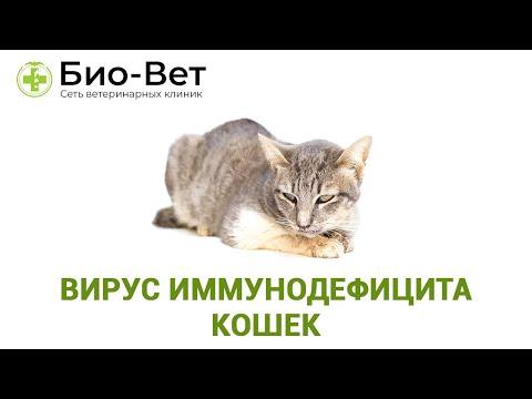 Болеют ли спидом кошки