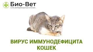 Вирус иммунодефицита кошек. Ветеринарная клиника Био-Вет.