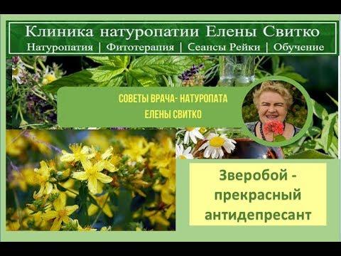 Зверобой - прекрасный антидепресант - советы натуропата Елены Свитко