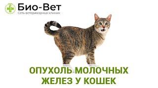 Опухоль молочных желез у кошек. Ветеринарная клиника Био-Вет.