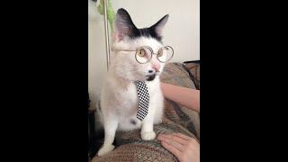 лучшие приколы январь 2020 КОШКИ 2020 ПРИКОЛЫ С КОШКАМИ Смешные Коты и Котики 2020 Funny Cats
