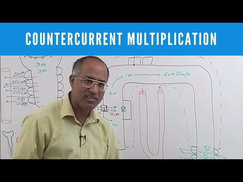 Urine Concentration & Dilution - Countercurrent Multiplication
