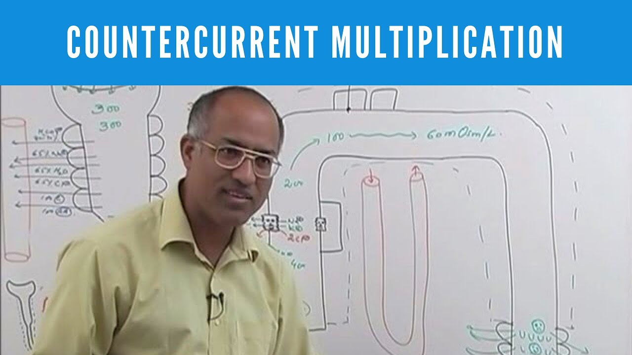 Dr najeeb video lectures torrent