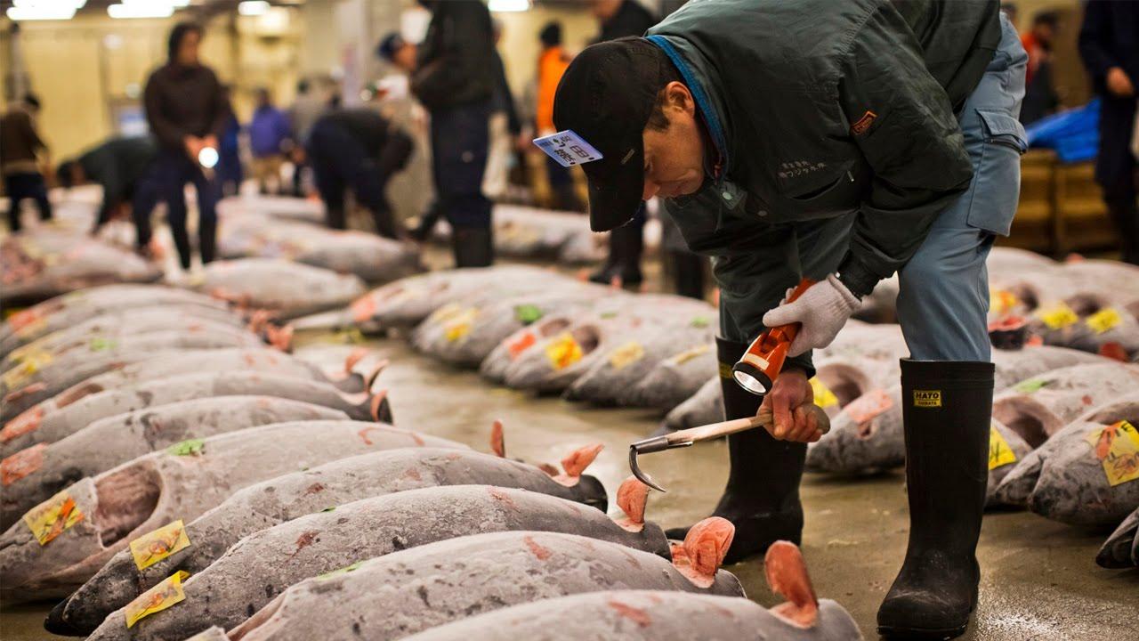 Resultado de imagem para maior mercado de peixe do mundo