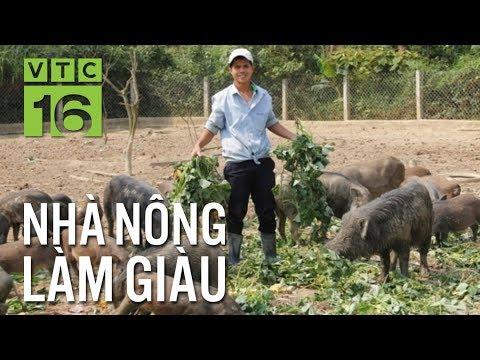 Bí quyết kiếm tiền tỷ từ nuôi lợn rừng I VTC16