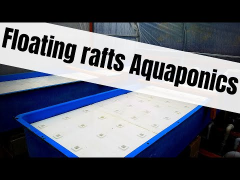 Aquaponic floating raft grow beds (hybrid aquaponic system) – How to cut Styrofoam