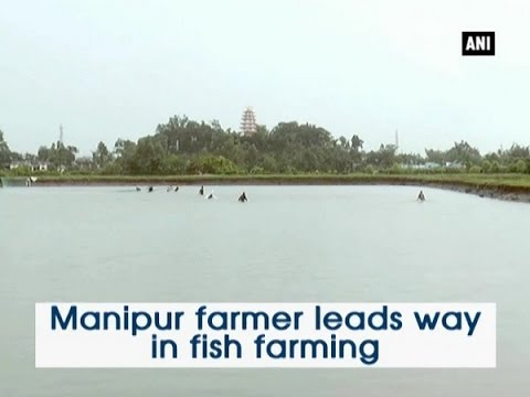 Manipur farmer leads way in fish farming - ANI News - YouTube