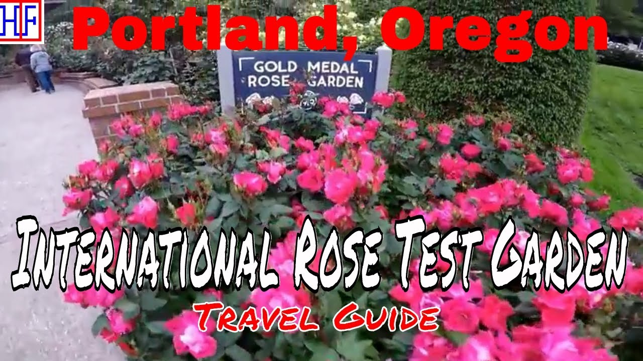 portland international rose test garden travel guide episode 5 - Portland Rose Garden
