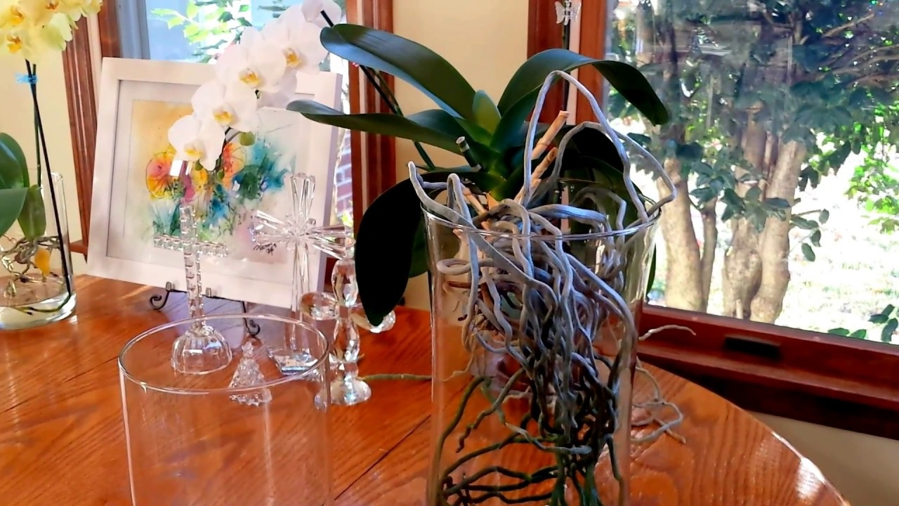 Tips for orchids in full water culture how to choose the right tips for orchids in full water culture how to choose the right vase for water culture reviewsmspy