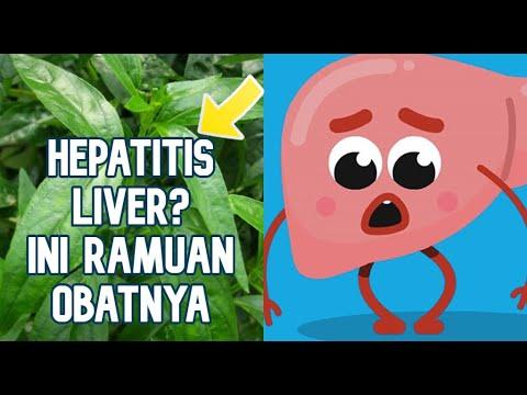liver-hepatitis-dan-obat-herbal-nya-menggunakan-daun-sambiloto