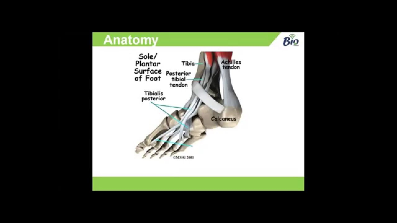 Tibialis Posterior Dysfunction: Anatomy, Causes & Management - YouTube