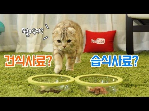 건식사료 VS 습식사료 수리노을 고양이 가족의 선택은?