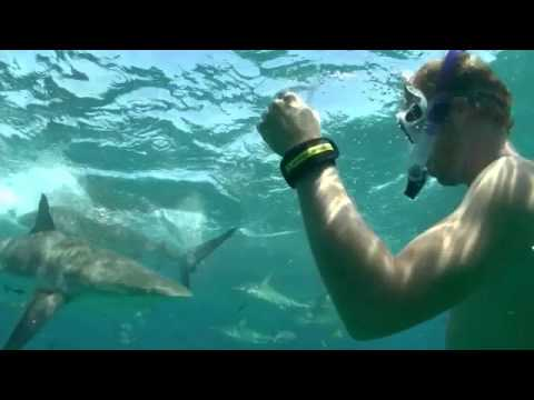 The Shark Testing With Large Reef Sharks Worlds Best Neoprene Deter Band You