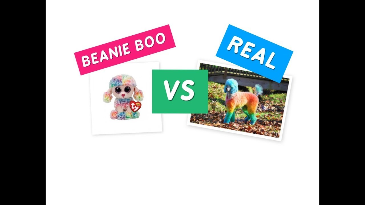 76c40400101 BEANIE BOO s VS REAL ANIMALS - Who is the CUTEST    - YouTube