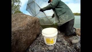 Whitebait Fishing: October 2011