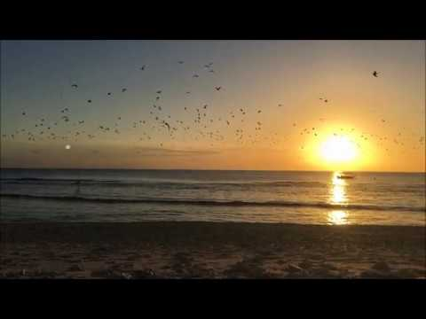 SNORKELING AT GREAT BARRIER REEF LADY ELLIOT ISLAND (part 1)
