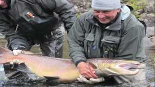 Monster 40 lb Salmon-Three Rivers-Kola Peninsula
