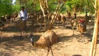 EMU AD.mpg