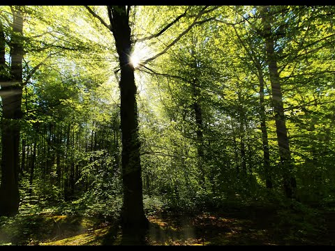 Фото Adzo Fpv Chopwell woods where it all began XD1