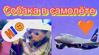 Перелёт с собакой//Собака в самолёте//Собака в аэропорту//Как это было//Подробный рассказ