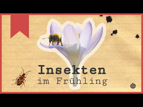 Insekten im Frühling - Die Frühaufsteher - Insecticon