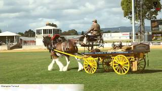 2018 Royal Adelaide Show Main Arena LIVE - Day 7 (Part 2) Champion Turnout Class 64-67
