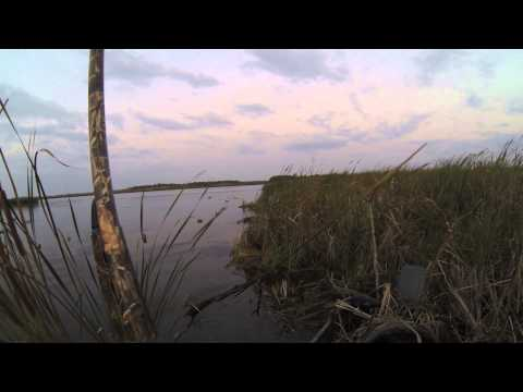 Duck Opener - US Minnesota 2014 - Ouverture chasse aux canards