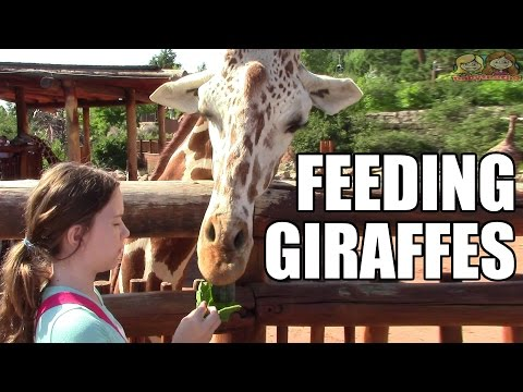 Feeding Giraffes!  Cheyenne Mountain Zoo! | Life With Jillian & Addie | Babyteeth4