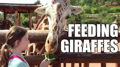 Feeding Giraffes at Cheyenne Mountain Zoo