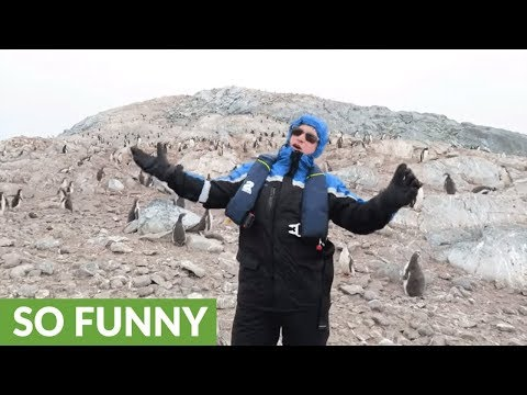 Penguins react to opera singer in Antarctica