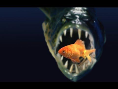 кормить игра рыб