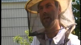 il lavoro delle api il miele
