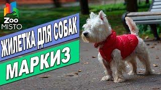 Жилетка для собак Маркиз| Обзор одежды для собак | Markiz Pet fashion review