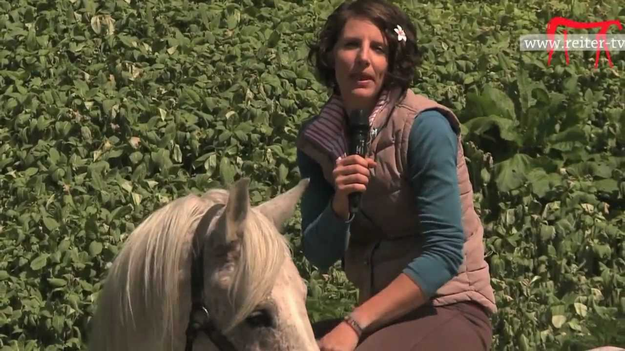 Filme Mit Pferden
