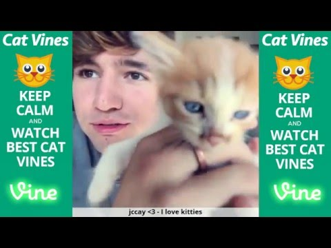 Thumbnail: Ultimate Cat Vines Compilation #1 - February 2016