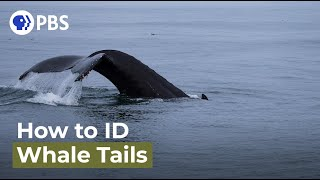 How to Identify Individual Whales
