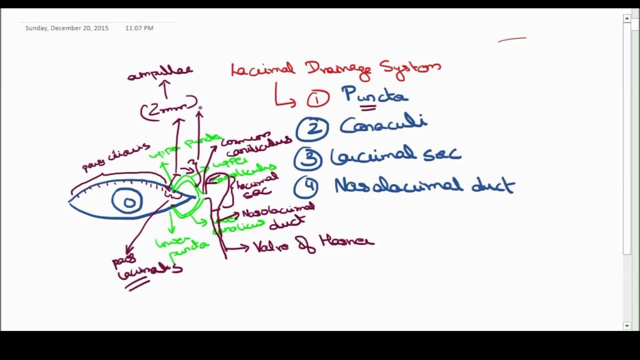nasolacrimal drainage system anatomy - YouTube