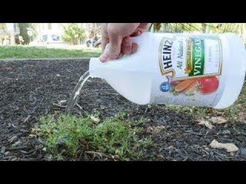 وضع الخل على نباتك فشاهدو ما حدث وما سيحدث مالم يكن يتوقعه أحد !!