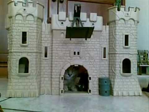 Il mio gatto che gioca nel castello! - YouTube