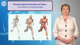 Биология 8 Системы органов в организме  Уровни организации организма